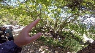 2000 Yaşında Ağaç Gördük / Yeni Yerler Keşfettik!