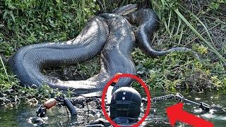 ТОП 5 опасных животных реки Амазонка