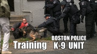 Boston Police K-9 Patrol In Field Training Police Dog