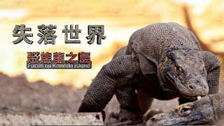 失落世界【聚焦龍之島】《聚焦全世界》第47期《4K SDR》 舒夢蘭The Lost World-Focus on Komodo Island 探秘地球上最傳奇 最可怕的史前巨獸科摩多龍 驚人畫面曝光