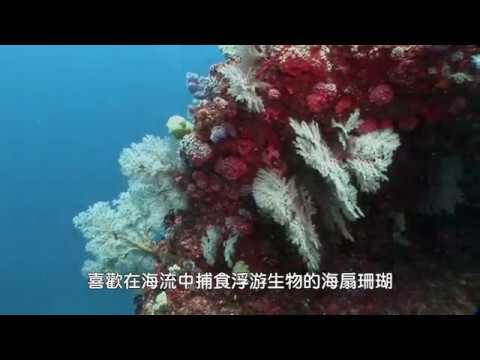 繽紛東沙東外環礁