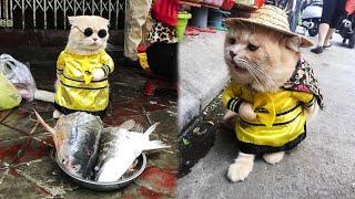 Забавный кот продает рыбу на вьетнамском рынке