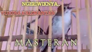 Ngeriwiknya Yuhina Kalimantan