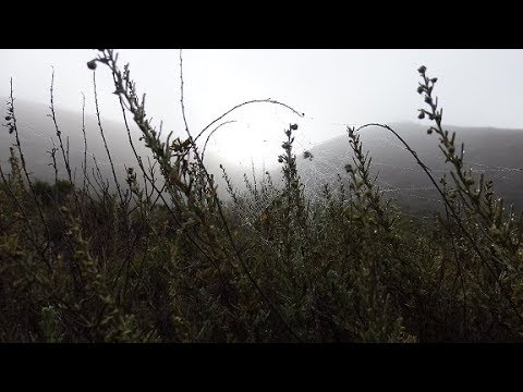 Montana de oro hike from Coon creek