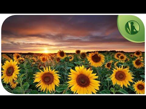 Permalink to Flowers That Help You Sleep