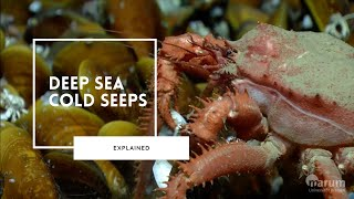 The Fascinating Life of Deep Sea Cold Seeps