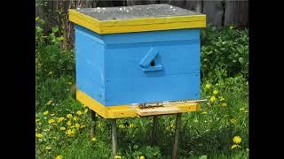 Занятие 3. Размножение пчелиных семей в естественной среде. Нервная система медоносной пчелы.