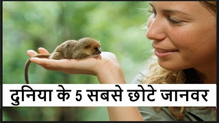 दुनिया के 5 सबसे छोटे जानवर - Top 5 Smallest Animals in the world in Hindi PART-1