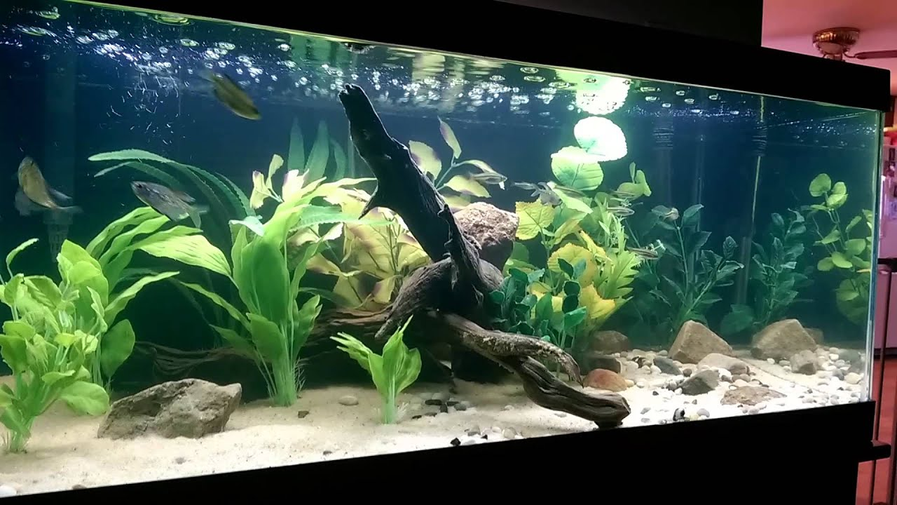 Tetra fish tank youtube tetra fish tank youtube 2017 for Tetra fish tank