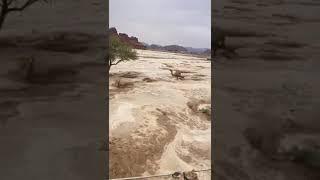 Rain in Arabia