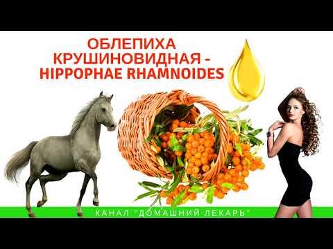 Облепиховое масло от эрозии шейки матки и в гинекологии - Домашний лекарь - выпуск №114