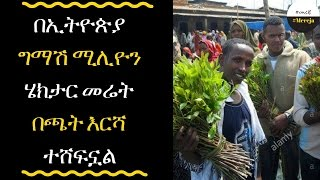 ETHIOPIA - chat covers half million hectares in Ethiopia