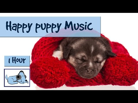 Keep your Pup Happy when he's Alone with our Music for Dogs.