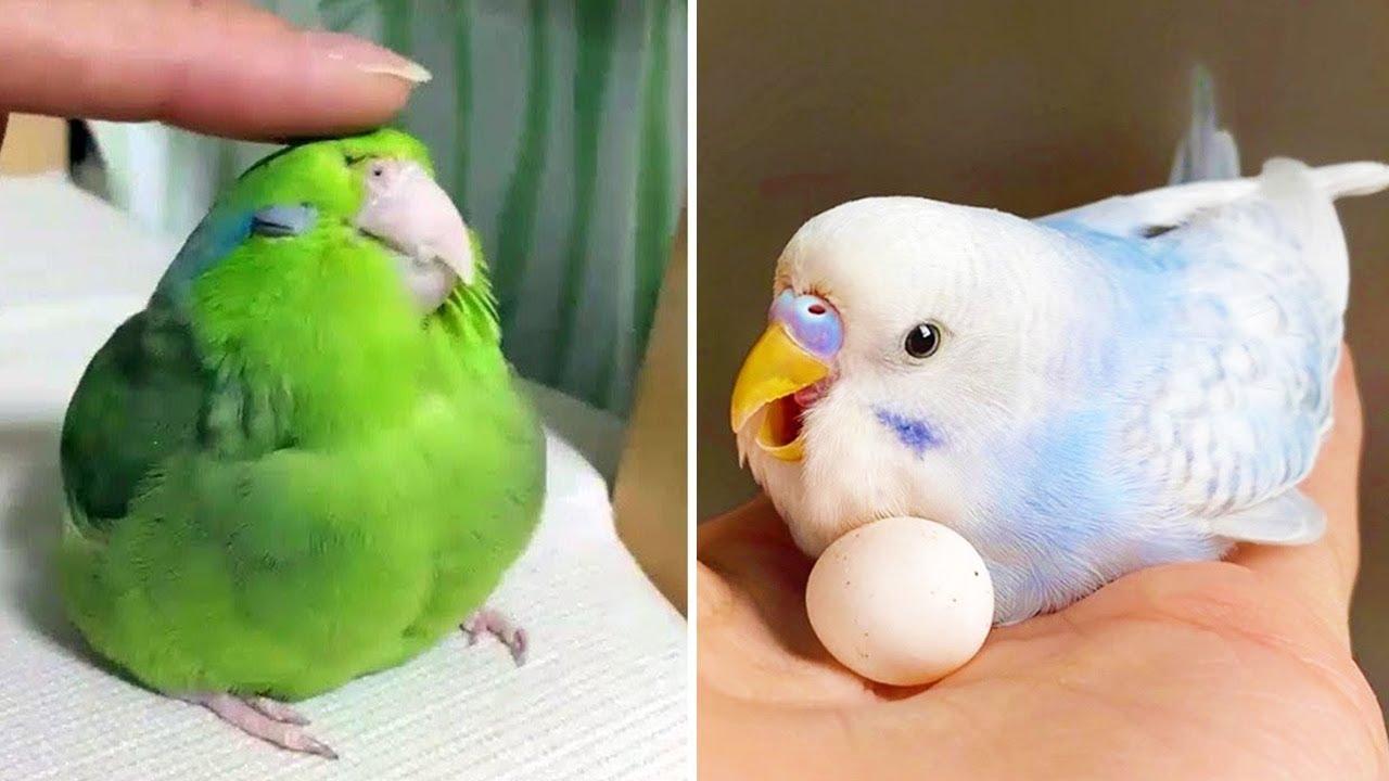 Baby Animals 🔴 Funny Parrots and Cute Birds Compilation (2021) Loros Adorables Recopilación #33