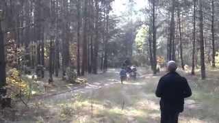 Коля  Вася-два коня!!!!Крадем ліс сред біла дня!!!!