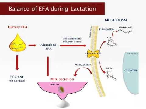 Dr. David Rosero - Essential Fatty Acid Nutrition And Seasonal Infertility