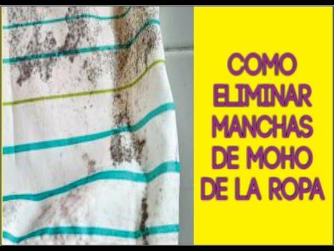 Como eliminar manchas de moho en la ropa recomendaciones - Como quitar el olor a humedad en la ropa ...