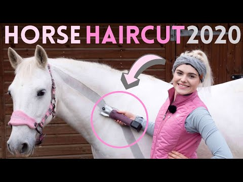 HORSE HAIRCUT 2020 | Clipping My Horse MYSELF! Again! Oh Dear.. | This Esme