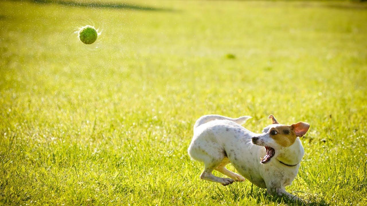 Társkereső oldal kutyák számára
