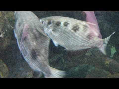 Scientists Train Fish To Recognize Human Faces, And Also Spit On Them