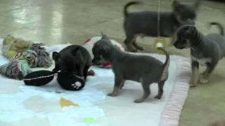 Feb 2012 pups.mpg
