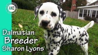 Dalmatian Breeder Sharon Lyons