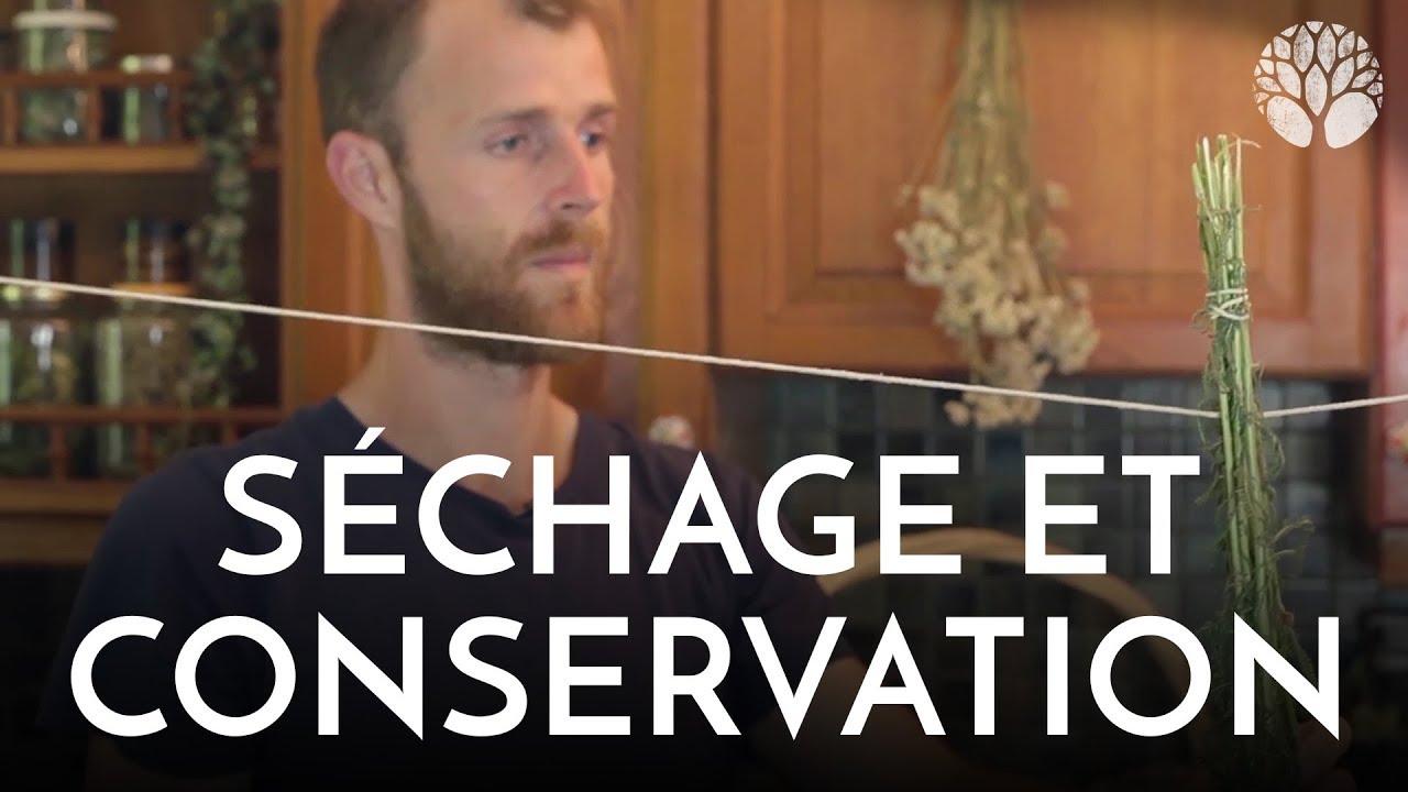 Séchage et conservation des plantes sauvages
