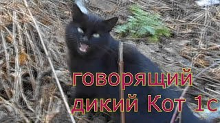 РЕДКИЙ КОТ! Милый Звук. 1 Серия.