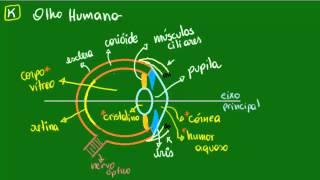 Olho humano - Introdução