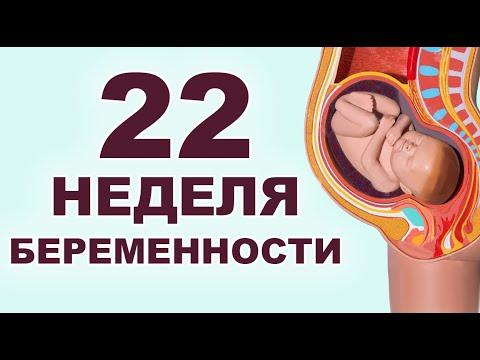 Что происходит с мамой и ребенком на 22 неделе беременности?