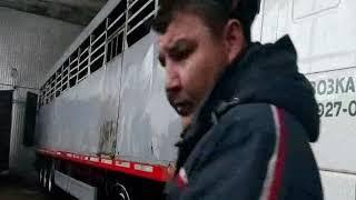 Закупка и перевозка скота по России