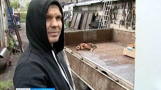 В Красноярске суд приговорил водителя, который убил собаку