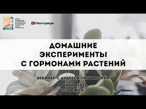 Домашние эксперименты с гормонами растений | Вебинар по педагогике с Андреем Липчинским