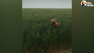 Dogs Leap Over Tall Grass