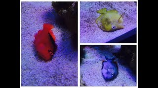 SCA 120 Gallon Reef   Ep.17   They are All DEAD!!! Whats next ?!