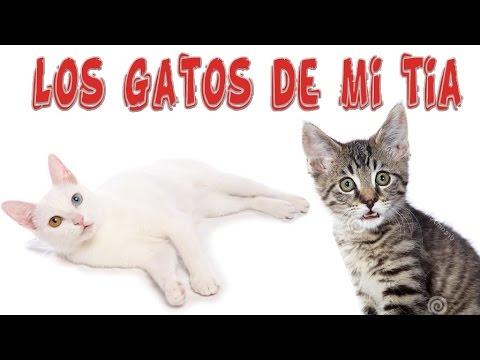 Los Gatos de mi Tía | Tu Mascota TV
