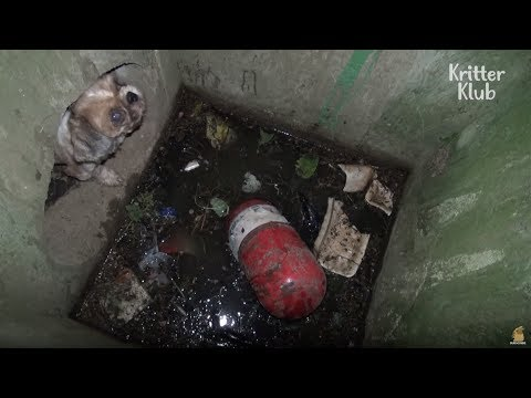Dog Can't Escape From The Drain | Animal in Crisis EP12