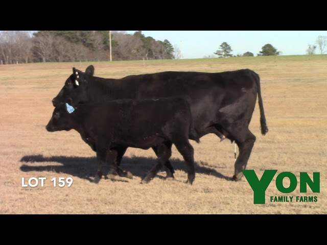 Yon Family Farms Lot 159