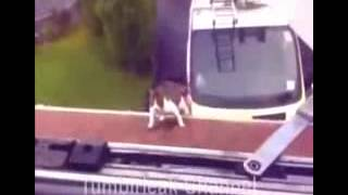 Funny Cats Videos June - Funny Cat Videos Ever- Funny Videos 2014 - Funny Animals