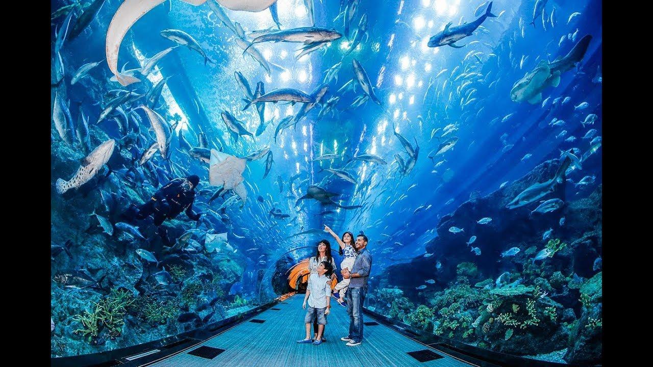 Dubai Aquarium Underwater Zoo Dubai دبي أكواريوم وحديقة الحيوانات تحت الماء دبي Youtube