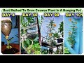 - Best Method To Grow Cosmos Plant in Plastic Hanging Bottle ll Vertical Gardening ll No Space Garden