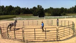 Monty Roberts works with Two Punch Willy