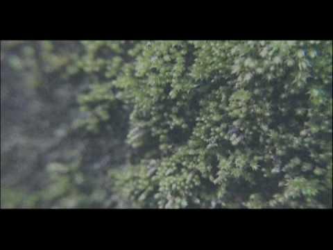 THE NOVEMBERS - Misstopia(PV)