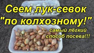"""""""Колхозный"""" способ посева лука-севка! Легко и просто!"""