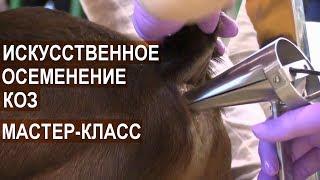 Мастер класс: Искусственное осеменение коз. Выставка АгроФерма-2018
