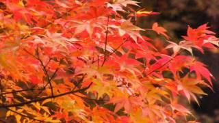 [HD] Autumn Colors 2009, Tofukuji Temple, Kyoto / 東福寺の紅葉