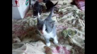 Милые котята )))