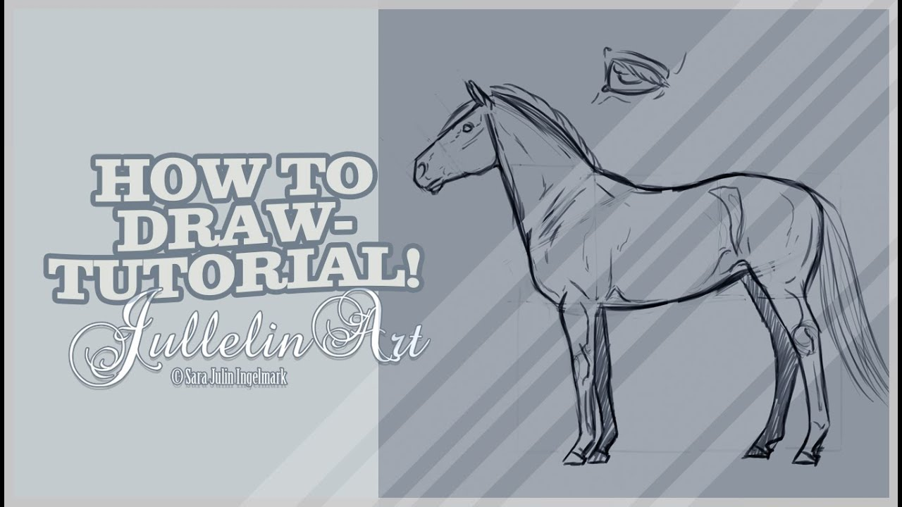 How to Draw Horse Anatomy - Tutorial! - YouTube