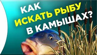 КАК ИСКАТЬ РЫБУ НА ПОДВОДНОЙ ОХОТЕ В КАМЫШАХ Подводная охота для начинающих 2021 обучение и тактика