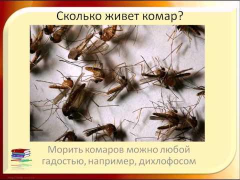 Вопрос: От чего зависит количество комаров летом?